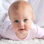 bebiko pro 2