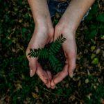 eko postanowienia